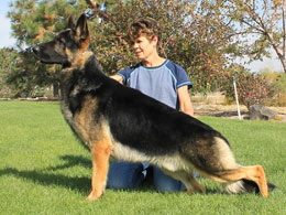 US Grant Germanshepherd